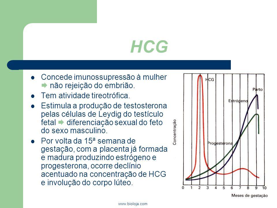 www.bioloja.com HCG Concede imunossupressão à mulher não rejeição do embrião. Tem atividade tireotrófica. Estimula a produção de testosterona pelas cé