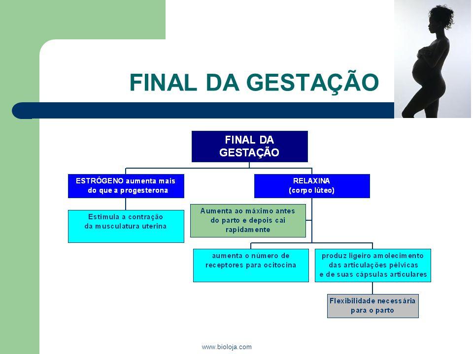 www.bioloja.com FINAL DA GESTAÇÃO