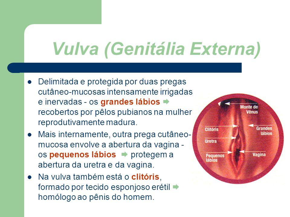 www.bioloja.com Vulva (Genitália Externa) Delimitada e protegida por duas pregas cutâneo-mucosas intensamente irrigadas e inervadas - os grandes lábio
