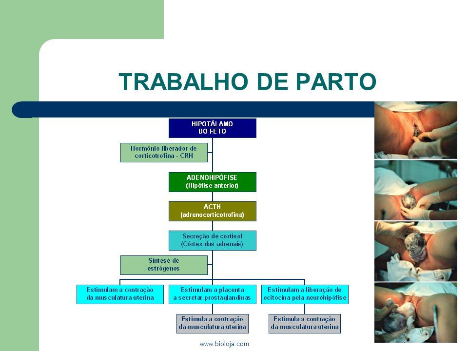 www.bioloja.com TRABALHO DE PARTO