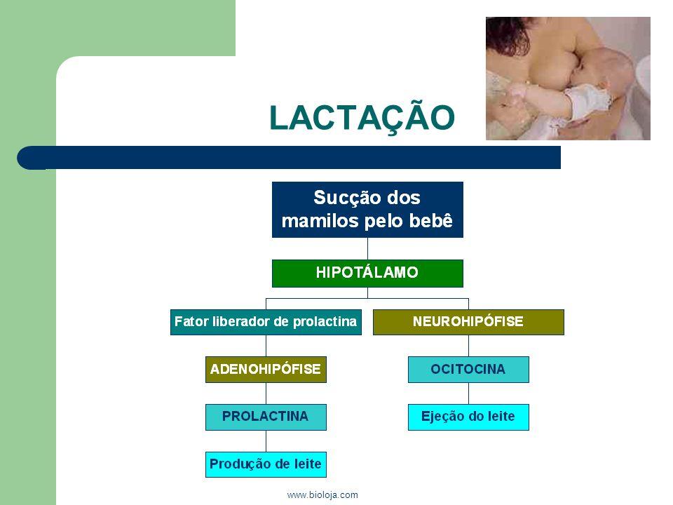 www.bioloja.com LACTAÇÃO