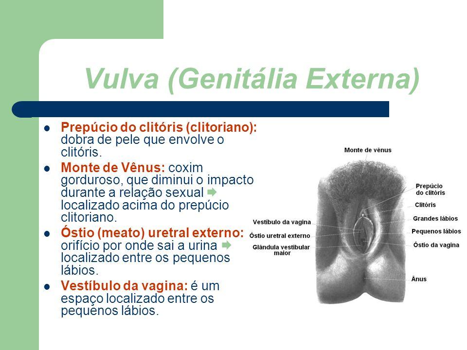 www.bioloja.com Vulva (Genitália Externa) Prepúcio do clitóris (clitoriano): dobra de pele que envolve o clitóris. Monte de Vênus: coxim gorduroso, qu