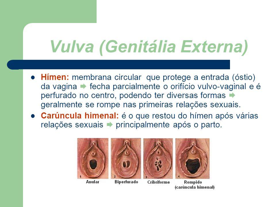 www.bioloja.com Vulva (Genitália Externa) Hímen: membrana circular que protege a entrada (óstio) da vagina fecha parcialmente o orifício vulvo-vaginal