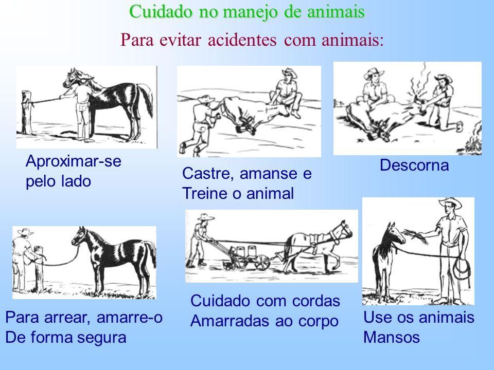 Trato com animais Os animais são úteis ao homem, mas trazem também riscos de acidentes Ex. quedas, chifradas, coices, mordidas, e as temidas zoonoses