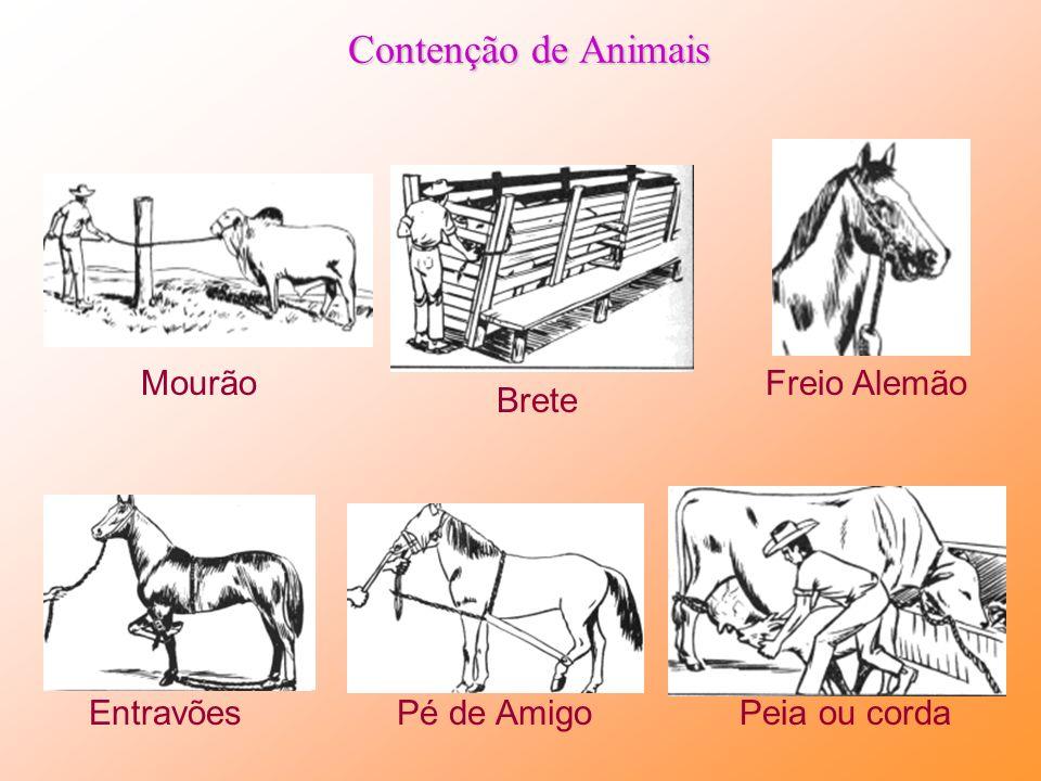 Cuidado no manejo de animais Para evitar acidentes com animais: Aproximar-se pelo lado Castre, amanse e Treine o animal Descorna Para arrear, amarre-o