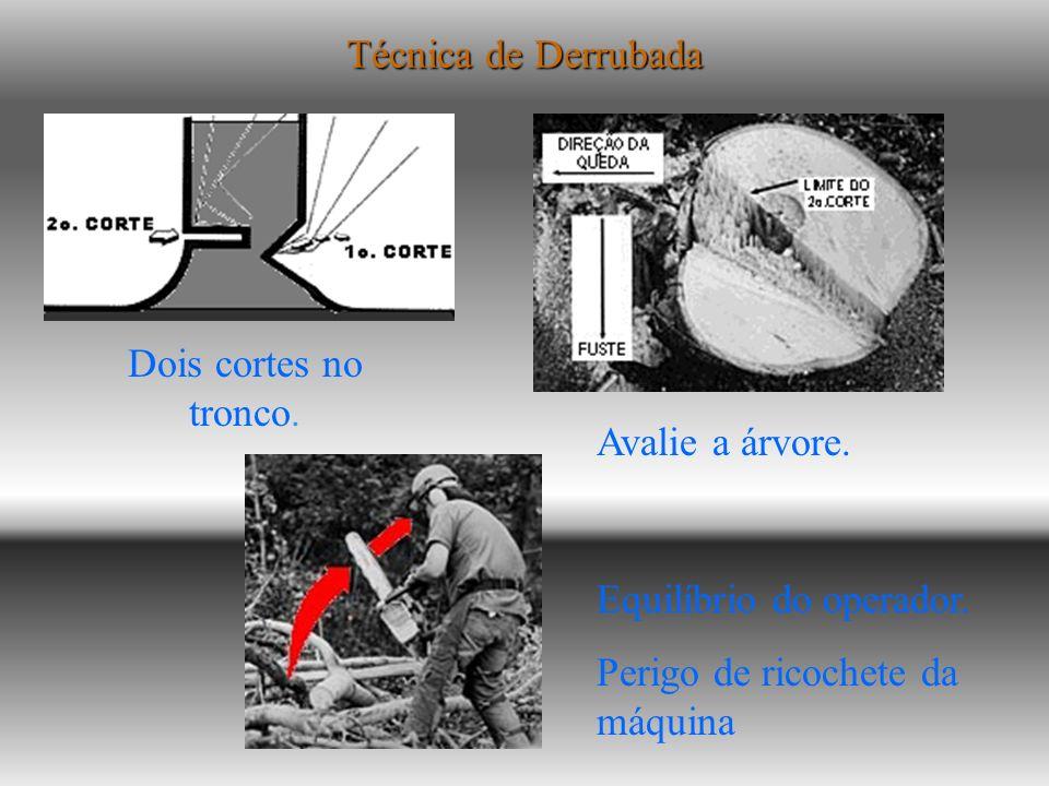 Derrubada de árvores com motosserras Os acidentes fatais com motosserras devem-se à queda de árvores, derrubadas sem a devida técnica