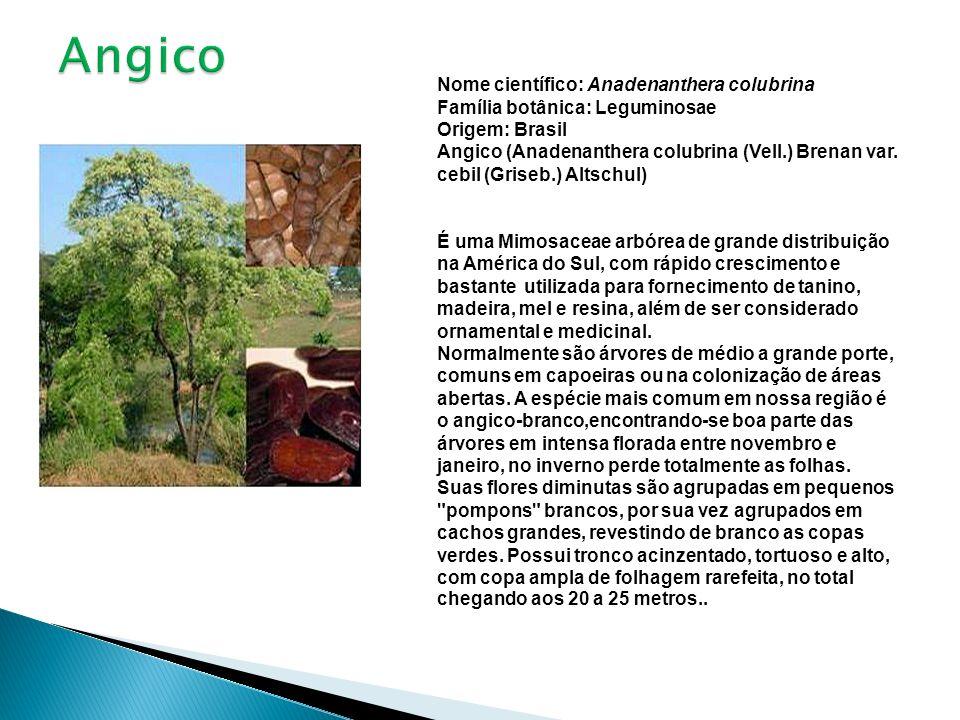 Nome científico: Anadenanthera colubrina Família botânica: Leguminosae Origem: Brasil Angico (Anadenanthera colubrina (Vell.) Brenan var. cebil (Grise