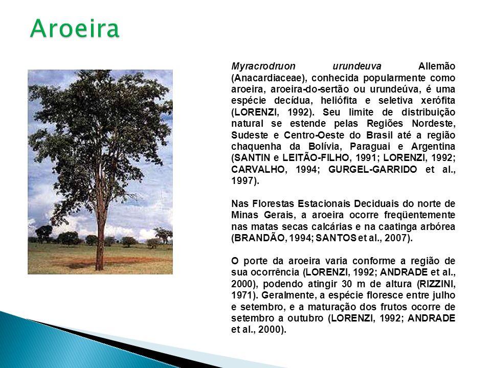 Myracrodruon urundeuva Allemão (Anacardiaceae), conhecida popularmente como aroeira, aroeira-do-sertão ou urundeúva, é uma espécie decídua, heliófita