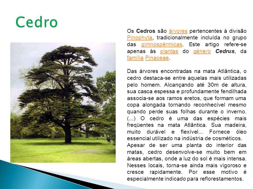 Os Cedros são árvores pertencentes à divisão Pinophyta, tradicionalmente incluída no grupo das gimnospérmicas. Este artigo refere-se apenas às plantas