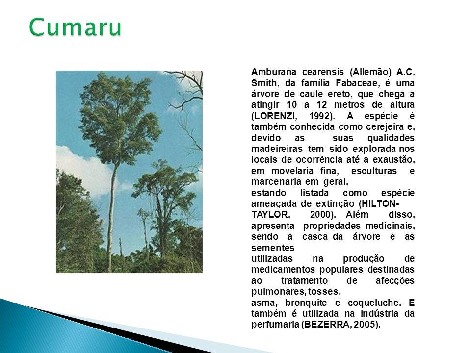 Amburana cearensis (Allemão) A.C. Smith, da família Fabaceae, é uma árvore de caule ereto, que chega a atingir 10 a 12 metros de altura (LORENZI, 1992