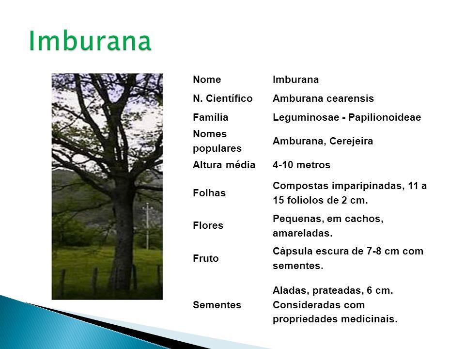 NomeImburana N. CientíficoAmburana cearensis FamíliaLeguminosae - Papilionoideae Nomes populares Amburana, Cerejeira Altura média4-10 metros Folhas Co