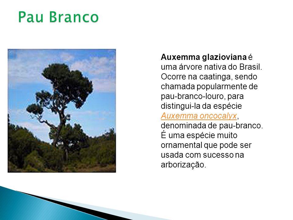 Auxemma glazioviana é uma árvore nativa do Brasil. Ocorre na caatinga, sendo chamada popularmente de pau-branco-louro, para distingui-la da espécie Au