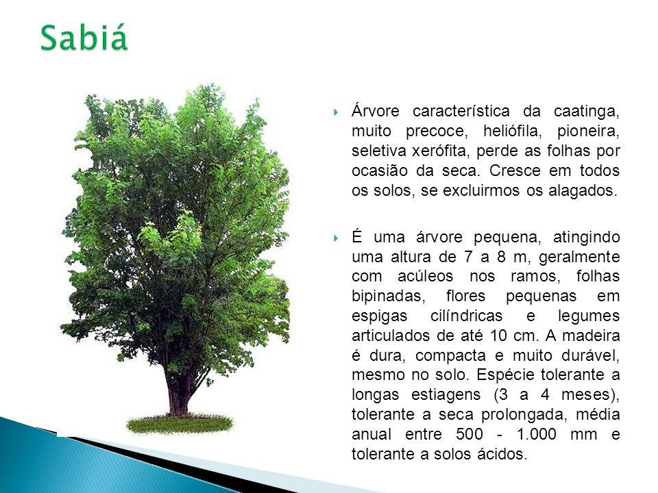 Árvore característica da caatinga, muito precoce, heliófila, pioneira, seletiva xerófita, perde as folhas por ocasião da seca. Cresce em todos os solo