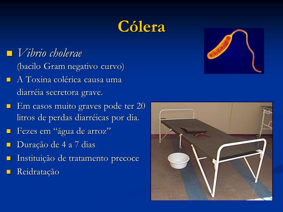 Cólera Vibrio cholerae Vibrio cholerae (bacilo Gram negativo curvo) A Toxina colérica causa uma diarréia secretora grave. A Toxina colérica causa uma
