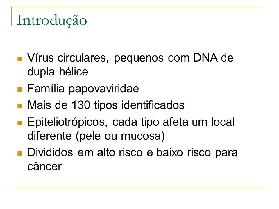 Introdução Vírus circulares, pequenos com DNA de dupla hélice Família papovaviridae Mais de 130 tipos identificados Epiteliotrópicos, cada tipo afeta