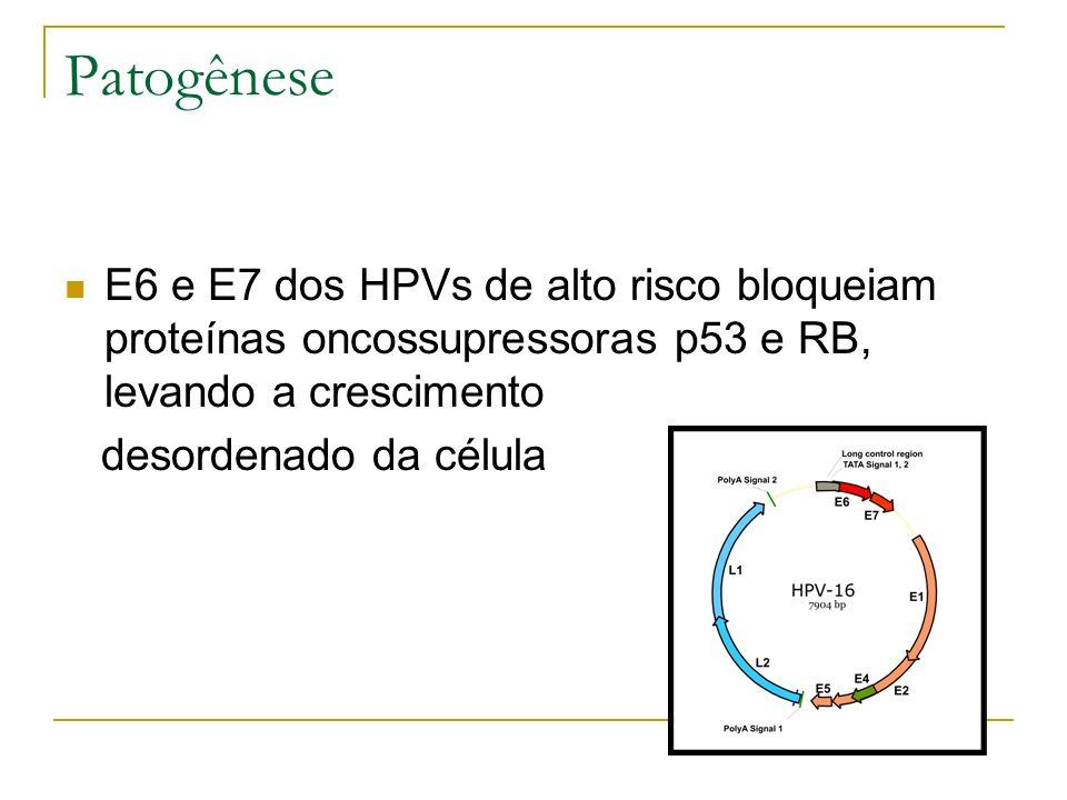 Patogênese E6 e E7 dos HPVs de alto risco bloqueiam proteínas oncossupressoras p53 e RB, levando a crescimento desordenado da célula