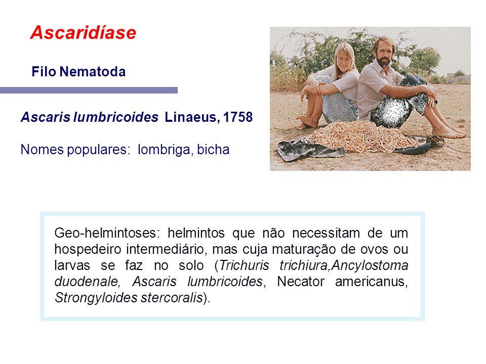 Ascaris lumbricoides Linaeus, 1758 Nomes populares: lombriga, bicha Ascaridíase Filo Nematoda Geo-helmintoses: helmintos que não necessitam de um hosp