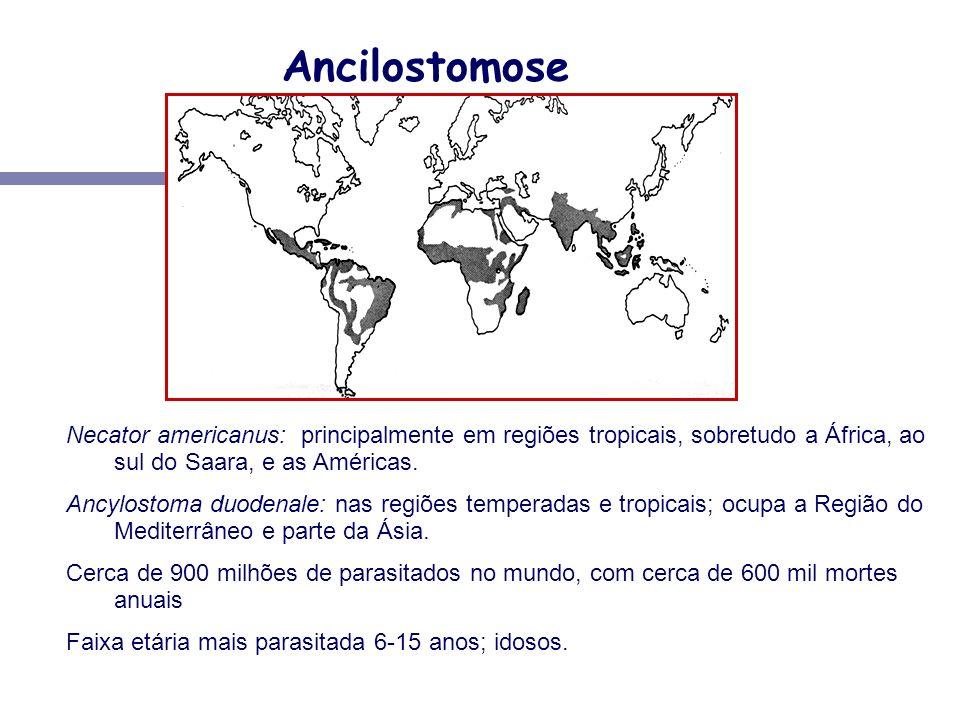 Ancilostomose Necator americanus: principalmente em regiões tropicais, sobretudo a África, ao sul do Saara, e as Américas. Ancylostoma duodenale: nas