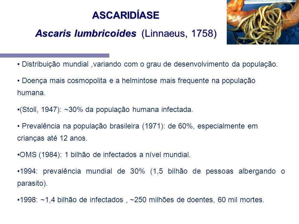 ASCARIDÍASE Ascaris lumbricoides (Linnaeus, 1758) Distribuição mundial,variando com o grau de desenvolvimento da população. Doença mais cosmopolita e