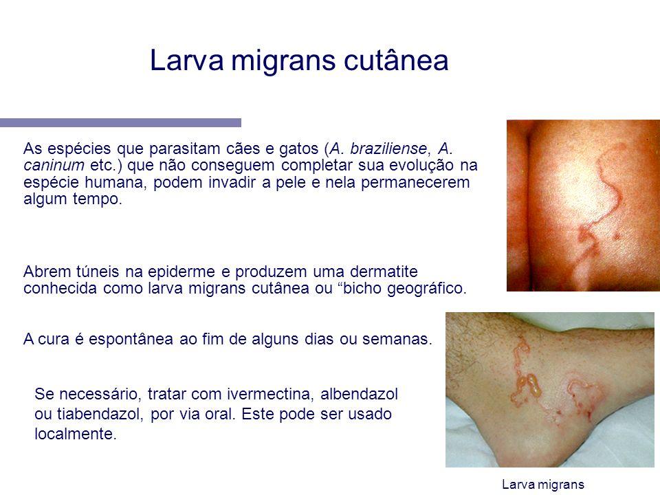 Abrem túneis na epiderme e produzem uma dermatite conhecida como larva migrans cutânea ou bicho geográfico. A cura é espontânea ao fim de alguns dias