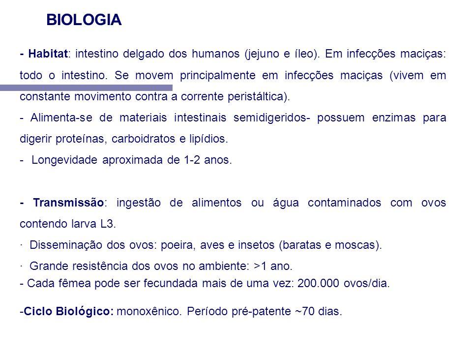 - Habitat: intestino delgado dos humanos (jejuno e íleo). Em infecções maciças: todo o intestino. Se movem principalmente em infecções maciças (vivem