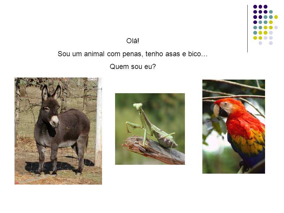 Estou um bocadinho confusa, qual destes animais é o anfíbio/batráquio?