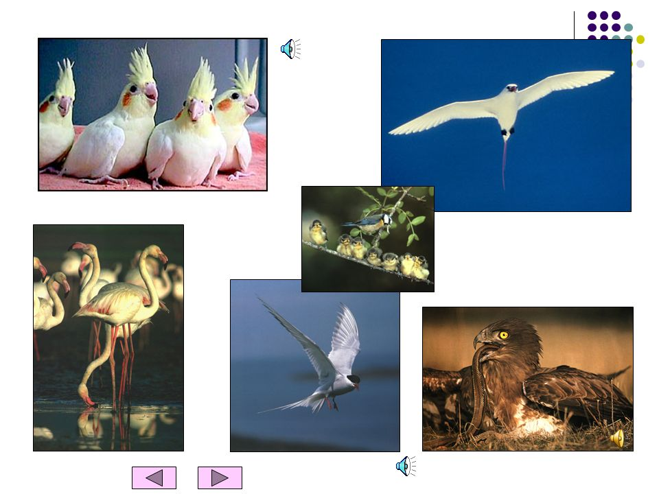 AS AVES Características das aves Têm o corpo coberto de penas. Nascem de ovos. Quase todas as aves voam. Têm ossos. São animais vertebrados.