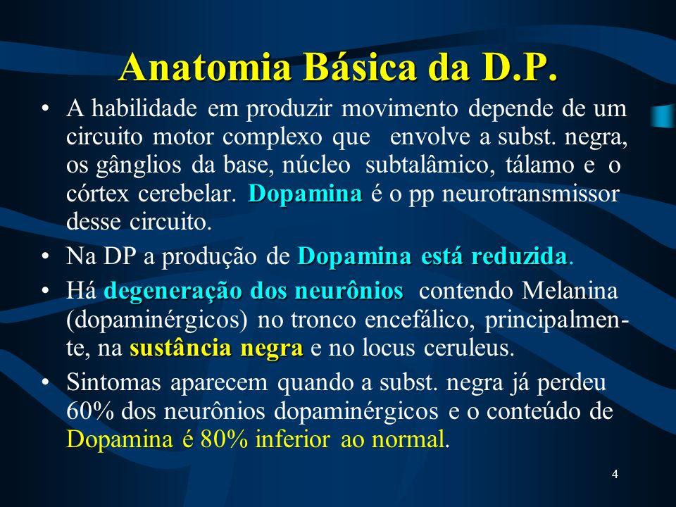 4 Anatomia Básica da D.P.