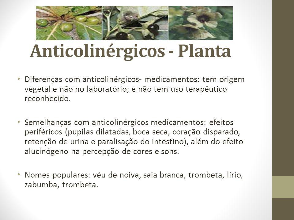Anticolinérgicos - Planta Diferenças com anticolinérgicos- medicamentos: tem origem vegetal e não no laboratório; e não tem uso terapêutico reconhecid