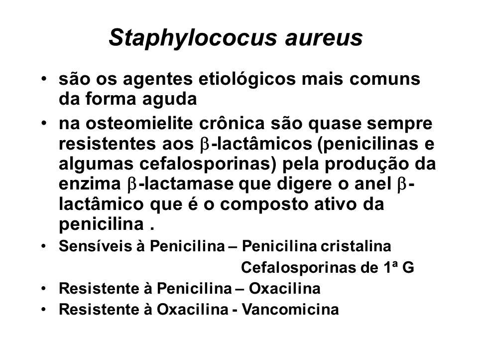 Staphylococus aureus são os agentes etiológicos mais comuns da forma aguda na osteomielite crônica são quase sempre resistentes aos -lactâmicos (penic