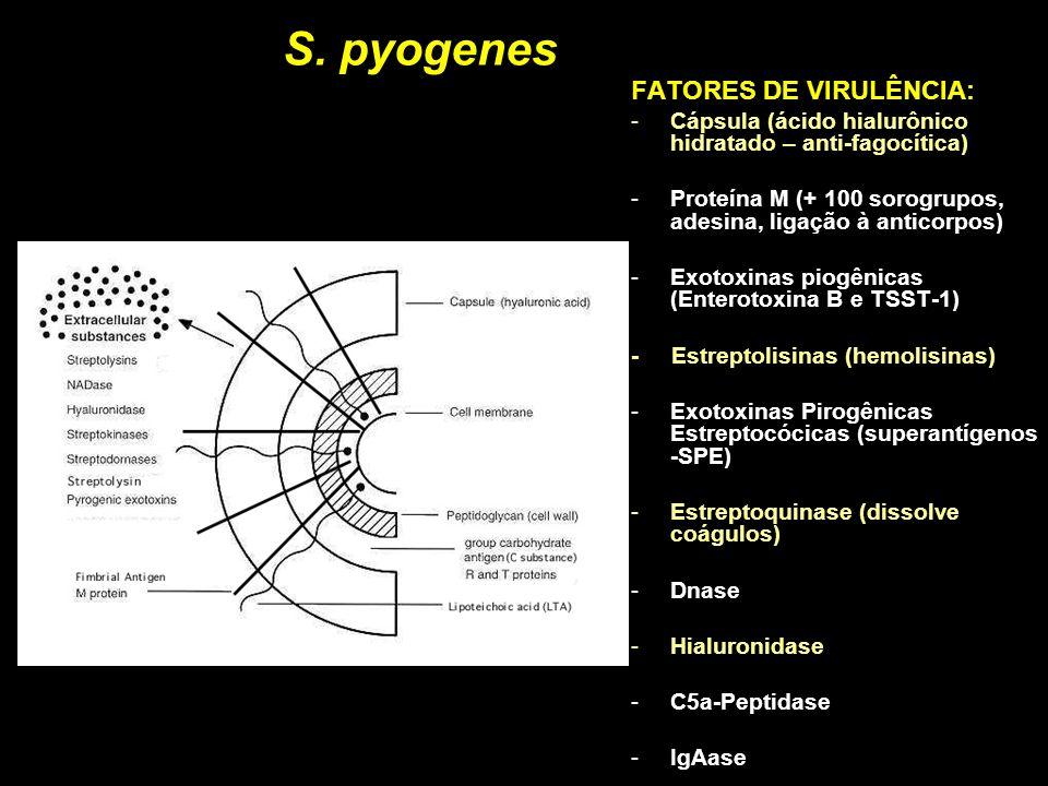 S. pyogenes FATORES DE VIRULÊNCIA: -Cápsula (ácido hialurônico hidratado – anti-fagocítica) -Proteína M (+ 100 sorogrupos, adesina, ligação à anticorp