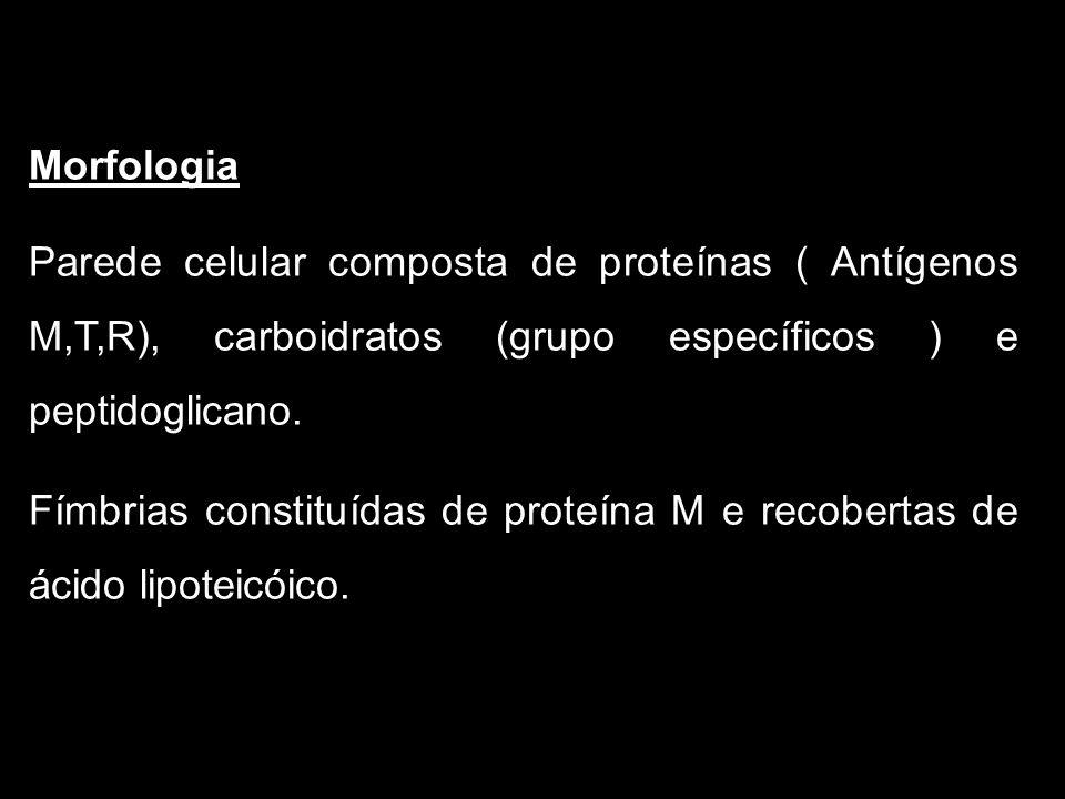 Morfologia Parede celular composta de proteínas ( Antígenos M,T,R), carboidratos (grupo específicos ) e peptidoglicano. Fímbrias constituídas de prote