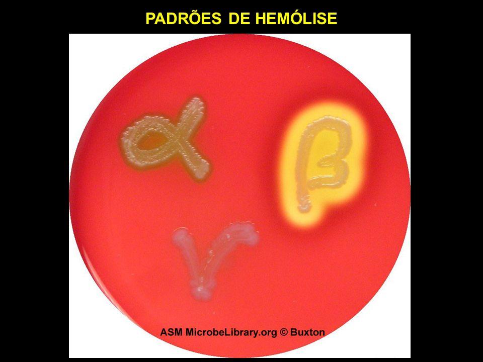 FORMA DE TRANSMISSÃO DO S. pyogenes NAS PIODERMITES contato