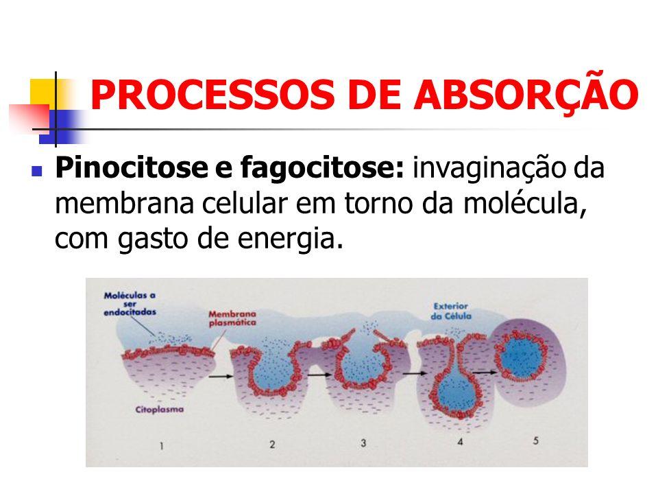 PROCESSOS DE ABSORÇÃO Pinocitose e fagocitose: invaginação da membrana celular em torno da molécula, com gasto de energia.