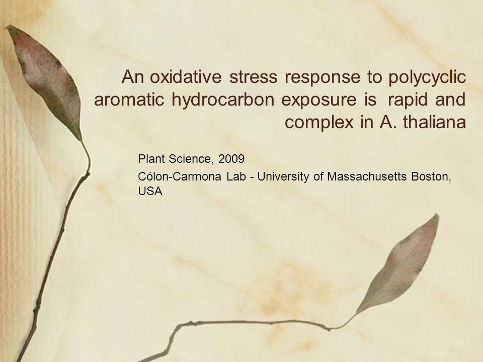An oxidative stress response to polycyclic aromatic hydrocarbon exposure is rapid and complex in A. thaliana Plant Science, 2009 Cólon-Carmona Lab - U