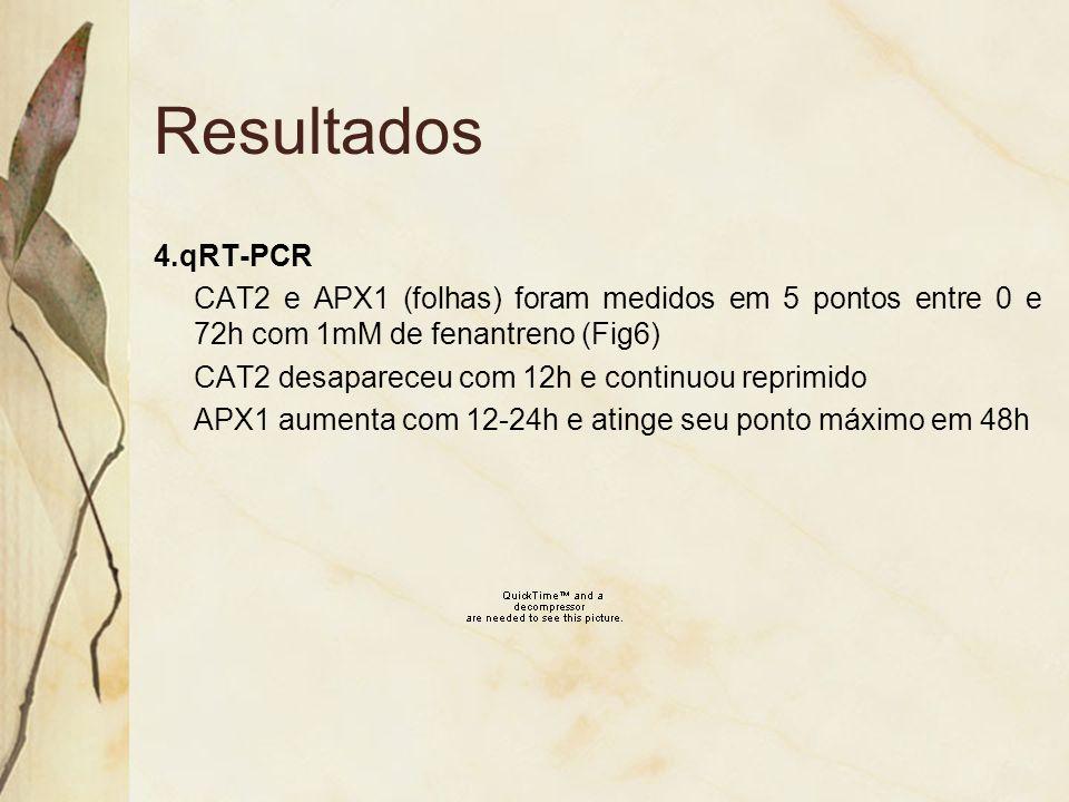 4.qRT-PCR CAT2 e APX1 (folhas) foram medidos em 5 pontos entre 0 e 72h com 1mM de fenantreno (Fig6) CAT2 desapareceu com 12h e continuou reprimido APX