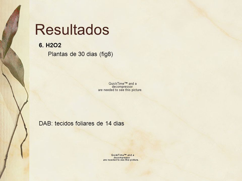Resultados 6. H2O2 Plantas de 30 dias (fig8) DAB: tecidos foliares de 14 dias