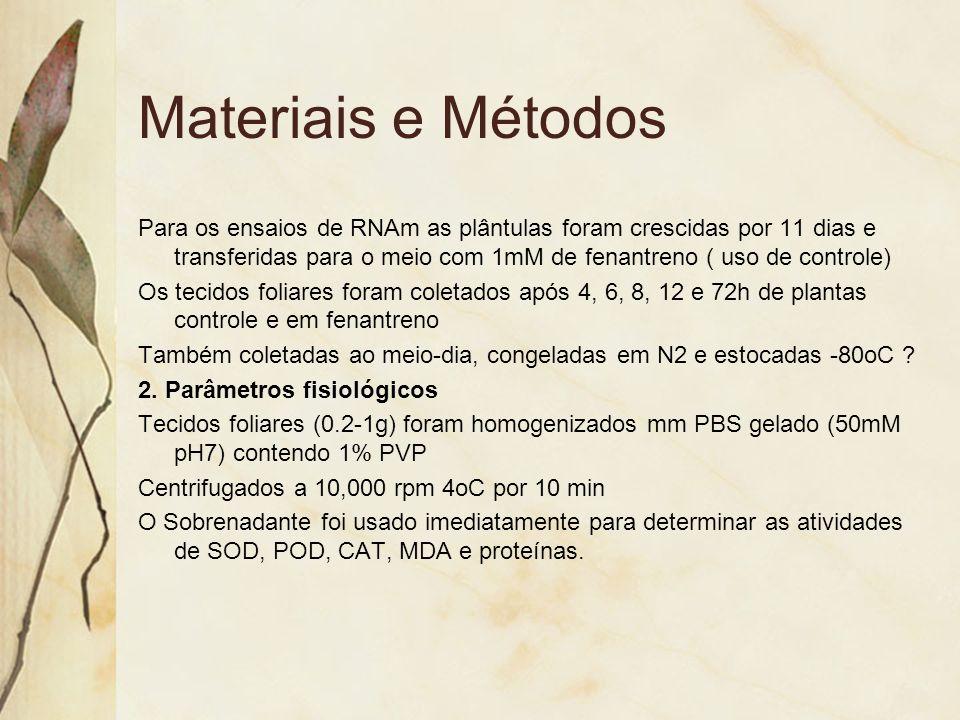 Materiais e Métodos Para os ensaios de RNAm as plântulas foram crescidas por 11 dias e transferidas para o meio com 1mM de fenantreno ( uso de control