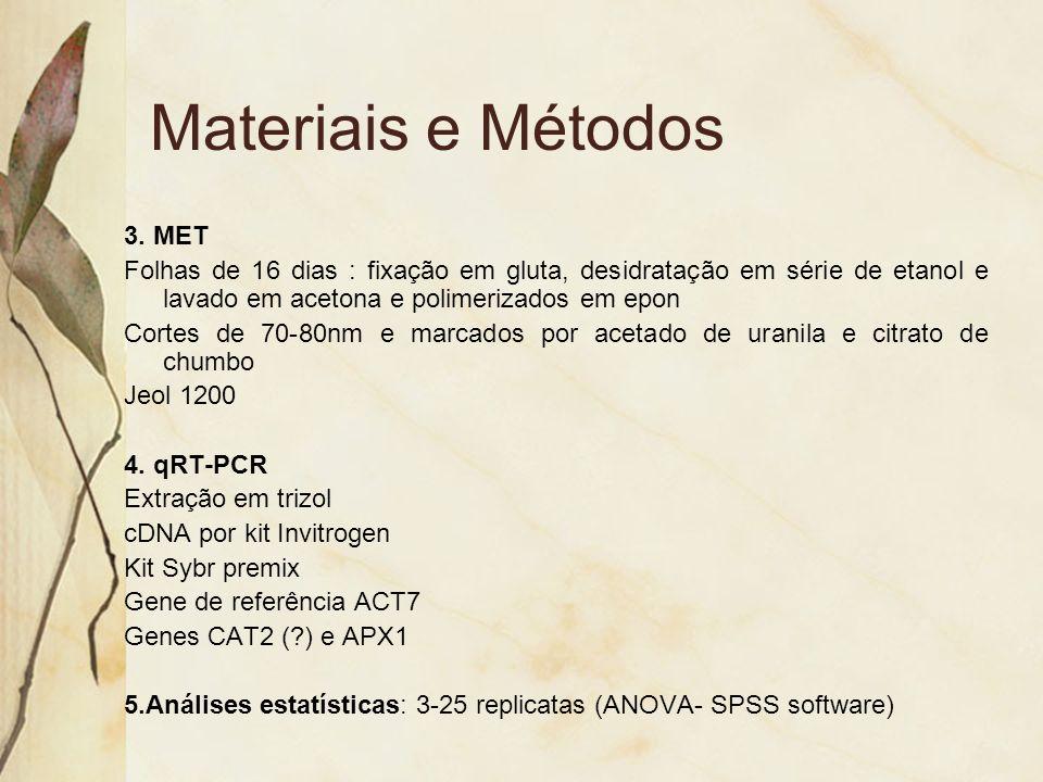 Materiais e Métodos 3. MET Folhas de 16 dias : fixação em gluta, desidratação em série de etanol e lavado em acetona e polimerizados em epon Cortes de