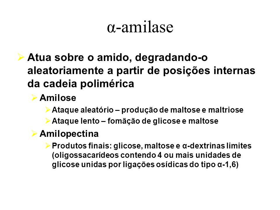 α-amilase Atua sobre o amido, degradando-o aleatoriamente a partir de posições internas da cadeia polimérica Amilose Ataque aleatório – produção de ma