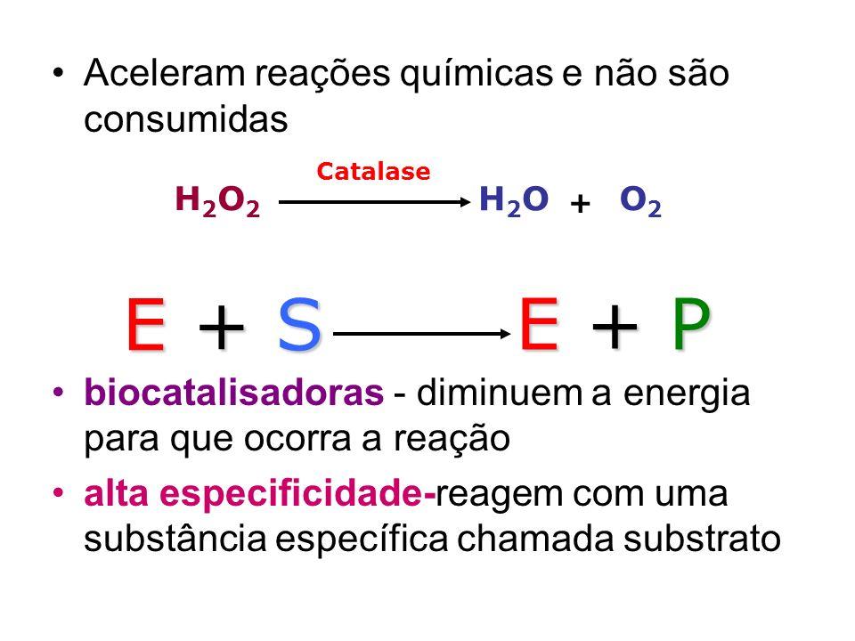 Aceleram reações químicas e não são consumidas biocatalisadoras - diminuem a energia para que ocorra a reação alta especificidade-reagem com uma subst