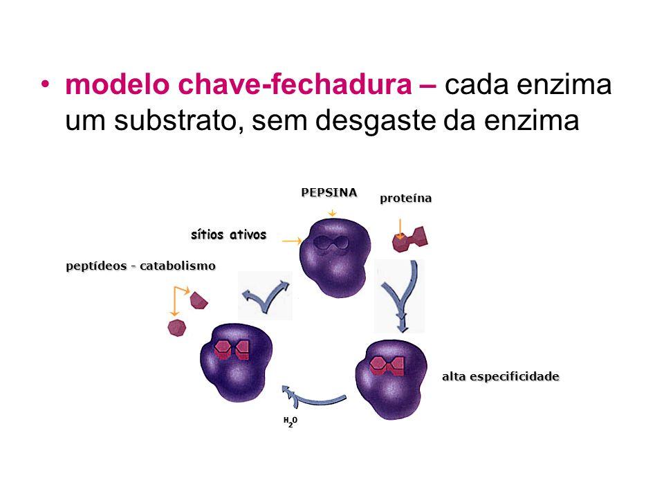 modelo chave-fechadura – cada enzima um substrato, sem desgaste da enzima chave fechadura sítios ativos ENZIMA produtos substrato PEPSINA proteína alt