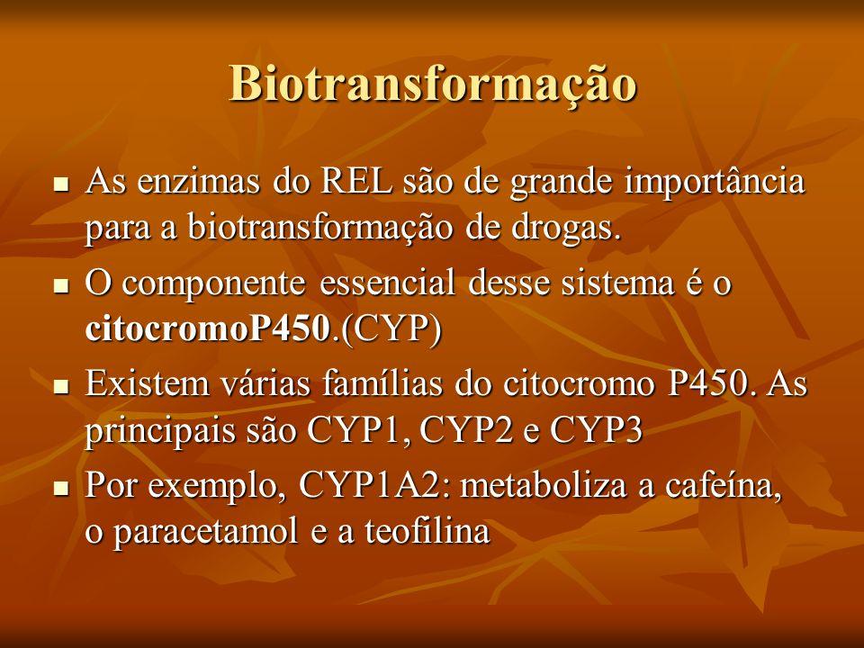 Biotransformação As enzimas do REL são de grande importância para a biotransformação de drogas. As enzimas do REL são de grande importância para a bio