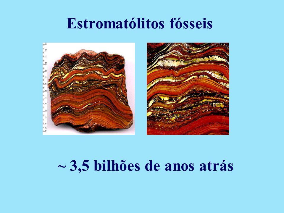 ~ 3,5 bilhões de anos atrás Estromatólitos fósseis