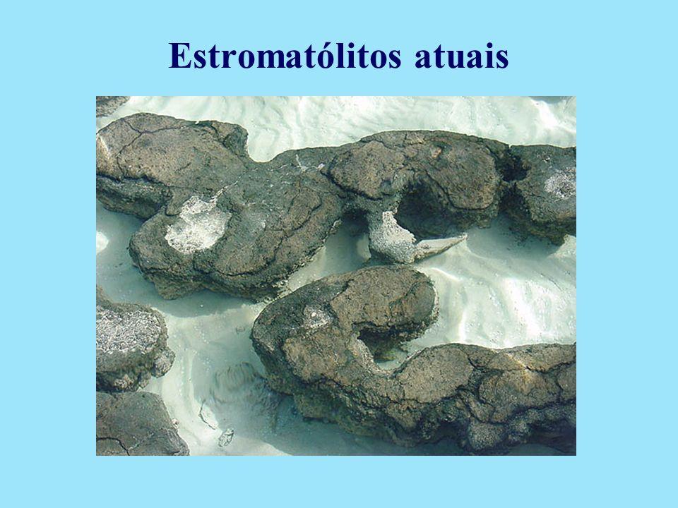 Estromatólitos atuais