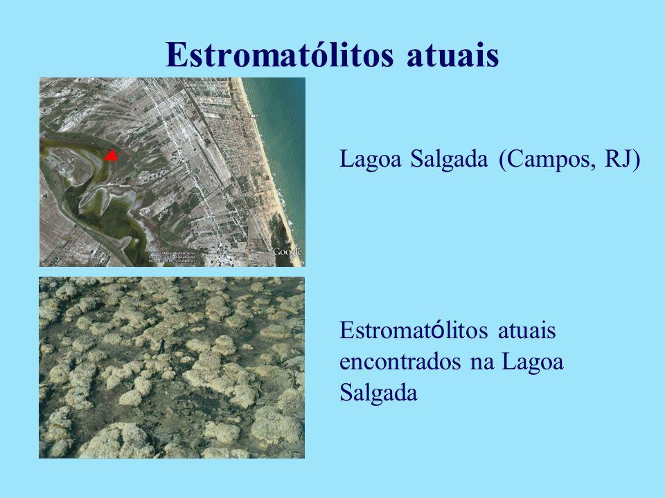 Lagoa Salgada (Campos, RJ) Estromat ó litos atuais encontrados na Lagoa Salgada