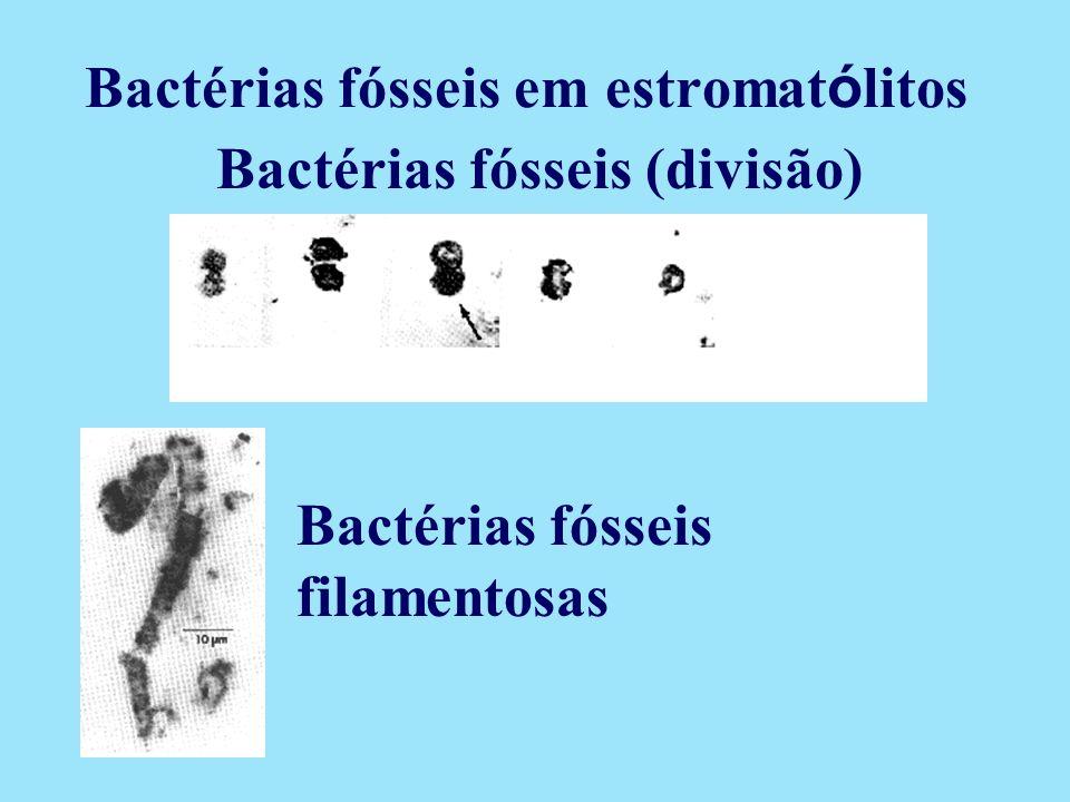 Bactérias fósseis (divisão) Bactérias fósseis filamentosas Bactérias fósseis em estromat ó litos
