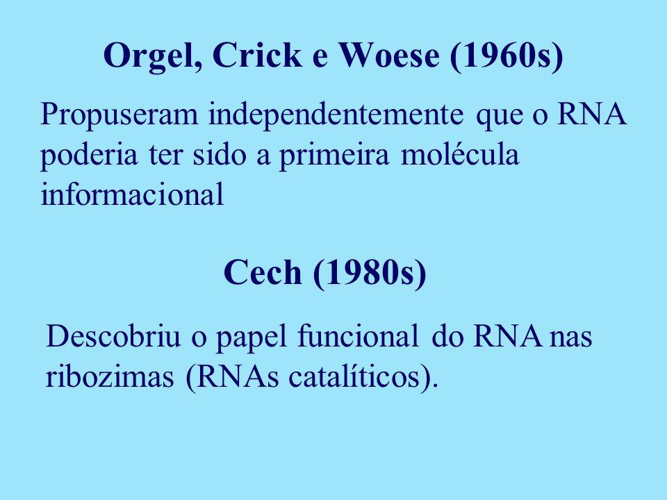 Propuseram independentemente que o RNA poderia ter sido a primeira molécula informacional Cech (1980s) Descobriu o papel funcional do RNA nas ribozima