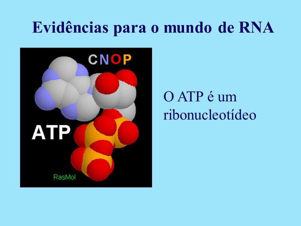 O ATP é um ribonucleotídeo Evidências para o mundo de RNA