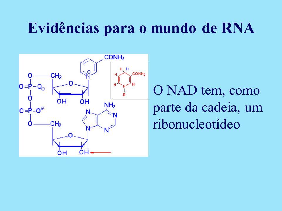 O NAD tem, como parte da cadeia, um ribonucleotídeo Evidências para o mundo de RNA